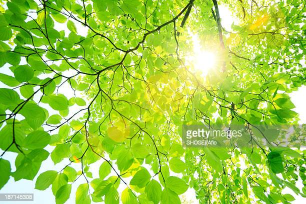Sun filtering through green leaves
