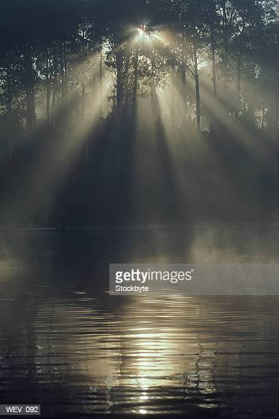 Sun filtering through trees and reflecting off water surface