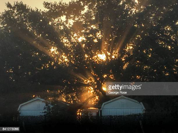 Sun filters through the Russian River Valley fog on August 25 near Santa Rosa California Following a record winter rainfall on the North Coast...