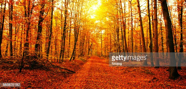 Sun in autumn forest : Stock Photo