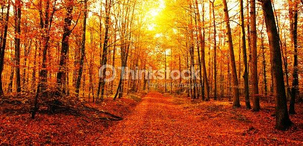 Sol na Floresta de outono : Foto de stock