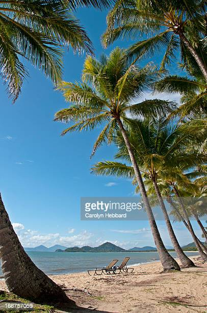 Sun Lounges on Tropical Palm Filled Beach