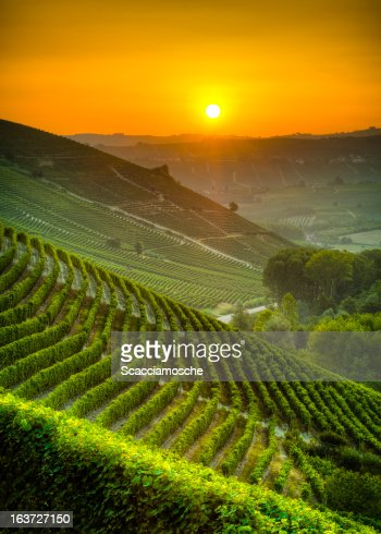 太陽を浴びながら、ブドウ園
