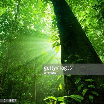 Sun rays : Foto de stock