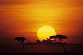 Sun rising over savannah, Masai Mara National Reserve, Kenya