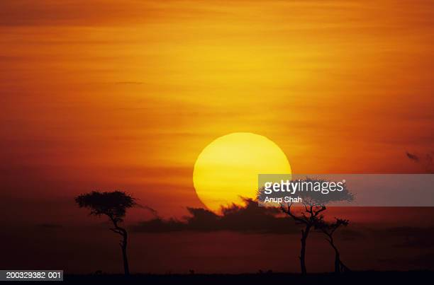 Sun rising over savannah, Masai Mara National Reserve, Kenya