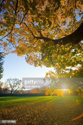 Sun setting behind trees : Stock Photo