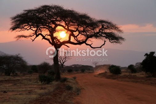 Sun setting through a tree in Africa. : Stock Photo