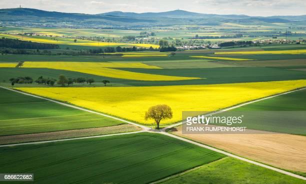 Sun shines on a rapeseed field in Muenzenberg near Frankfurt am Main western Germany on May 21 2017 / AFP PHOTO / dpa / Frank Rumpenhorst / Germany...