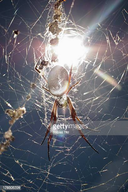 Sun shining on a spider hanging from a web