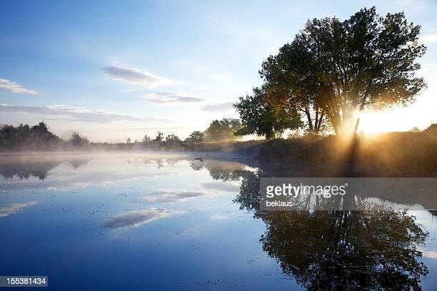 Sun shining through a tree on foggy morning next to
