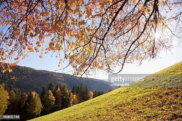 Sonne scheint durch Herbst Farbige cherry tree canopy