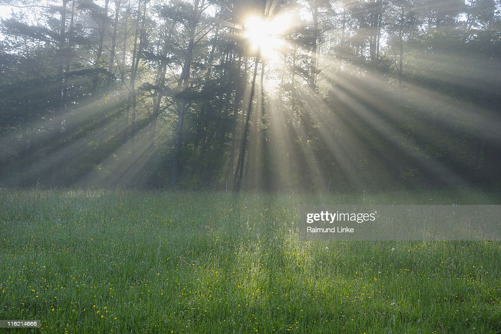 Sun shining through forest : Stock Photo