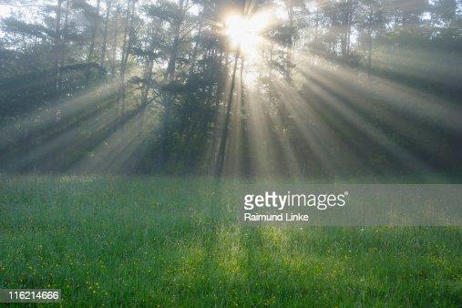 Sun shining through forest : Stock Photo