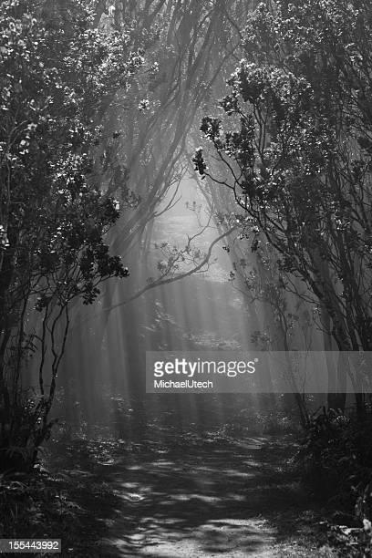 Sun Shining Through Misty Trees