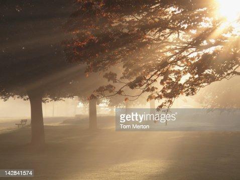 Sun shining through trees in foggy field : Stock Photo