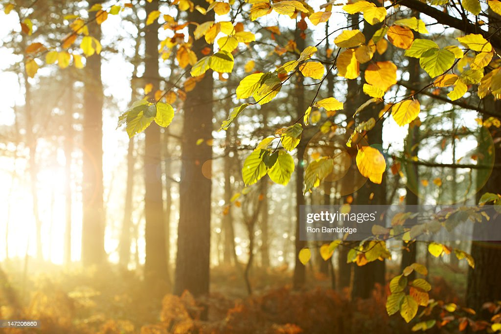 Sun shining through trees in woods