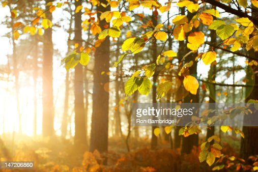 Sun shining through trees in woods : Stock Photo