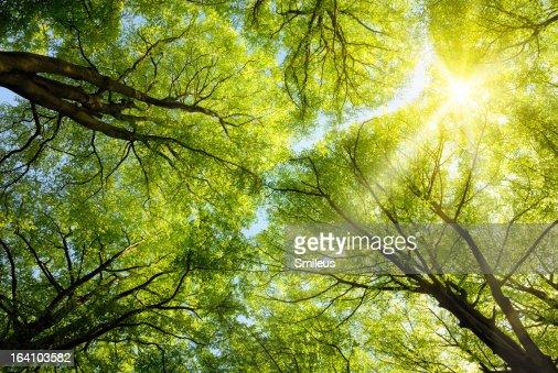 Sun shining through treetops : Stock Photo
