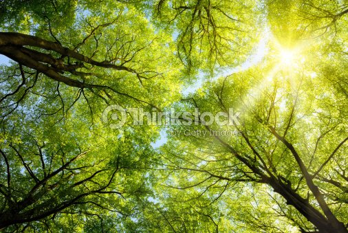 Sun shining through treetops : Stock Photo
