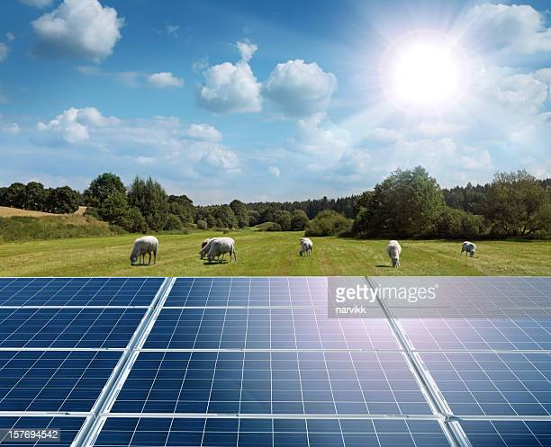 Sun, Solar Panels and Green Field with Grazing Sheep