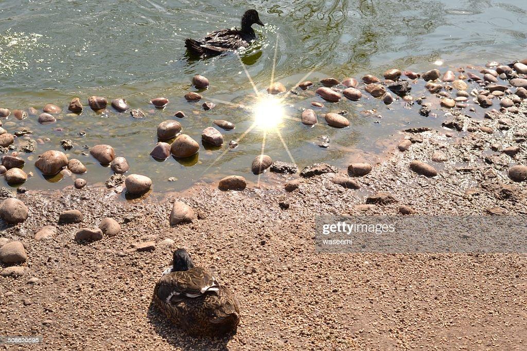 Sun Sparkle on Water : Stock Photo