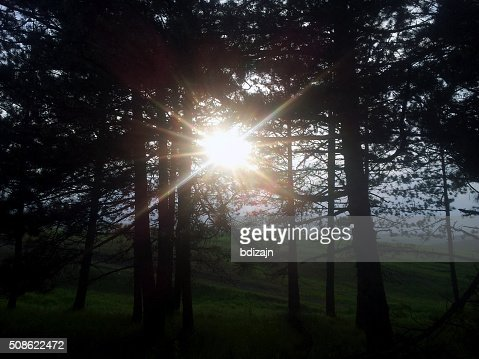 Sun Through Forest : Stock Photo