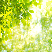 Background with sunbeam and leaves in the forest