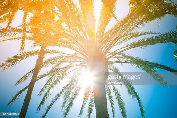 Sunbeam coming through palm tree leaves
