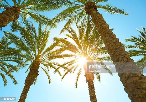 Sonnenstrahl Sie über palm-Baum-Blätter
