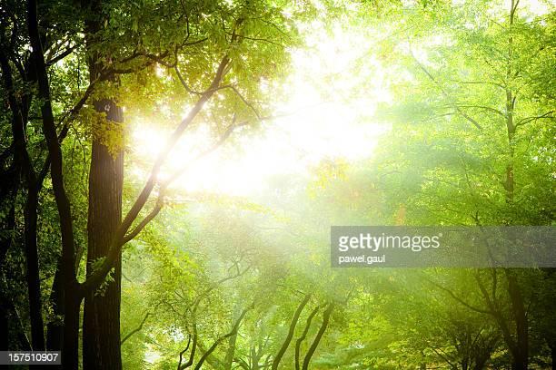 太陽光線の中での木の枝