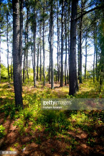 Sunbeam lighting a patch of underbrush and tree trunks in forest - Easton, Maryland, USA.