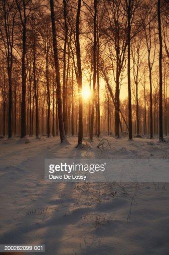 Sunbeam shining through woods : Stock Photo