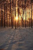 Sunbeam shining through woods