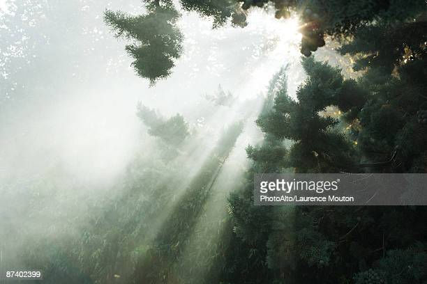 Sunbeams breaking through tree branches and