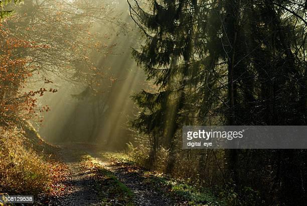 Sunbeams que pasa a través de bosques en la ruta