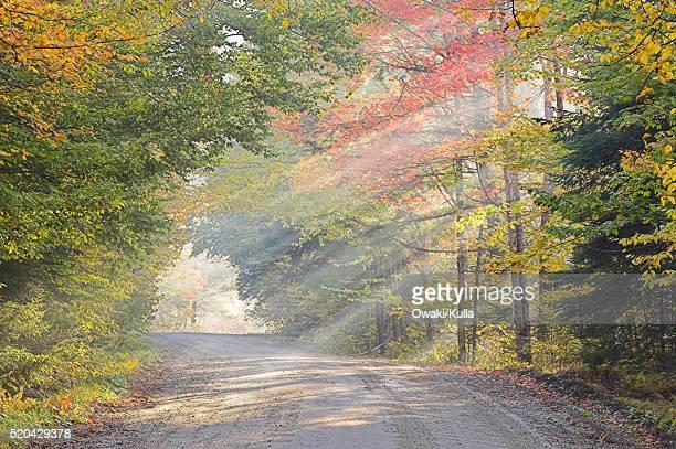 Sunbeams on Rural Road