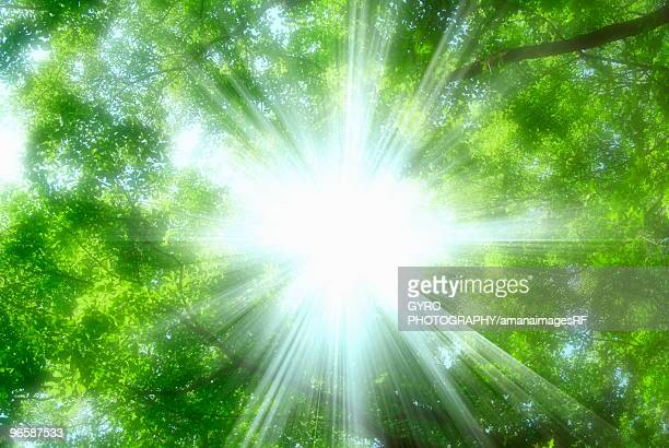 Sunbeams shining through trees