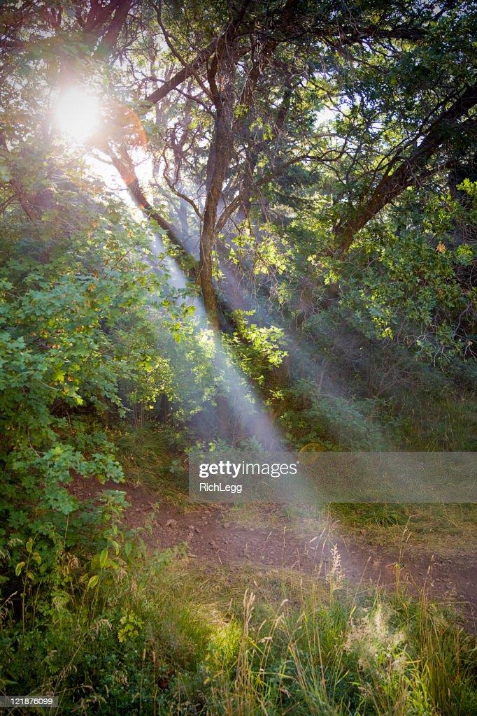Sunbeams Through Trees : Stock Photo