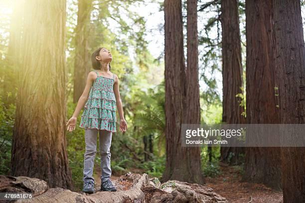 Sunburst in the forest