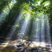 Sunburst through trees in forest Malaysia