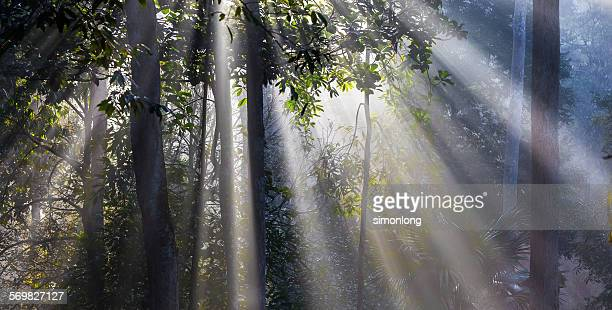 Sunburst through trees in forest .
