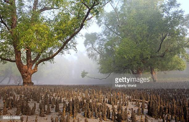 Sundarban the largest littoral mangrove forest in the world Bangladesh