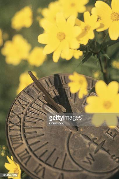 Sundial and flowers