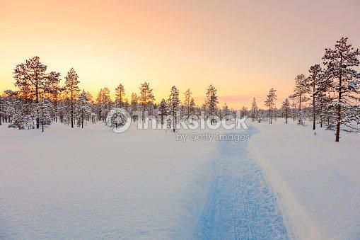 Sundown in winter snowy forest, beautiful landscape : Foto de stock