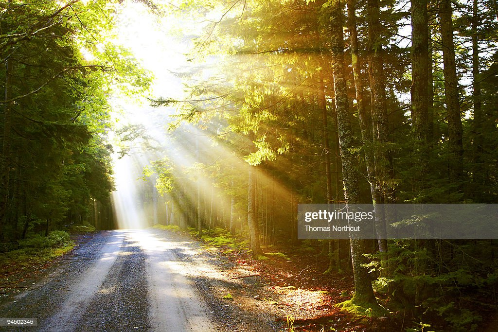 Sunflare on road : Stock Photo