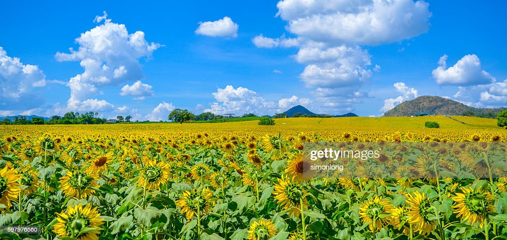sunflower thai sexleksaker östersund