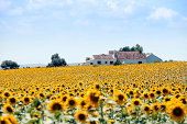 Sunflower fields and spanish house