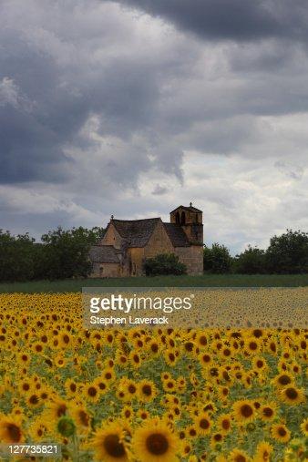 Sunflower fields in Dordogne