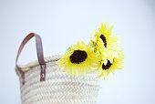 Sunflower in straw bag